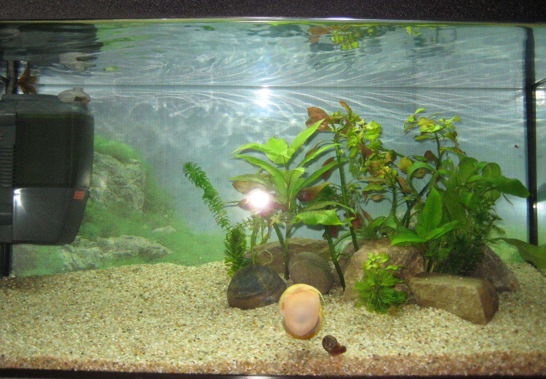 viermisori mici albi in acvariu