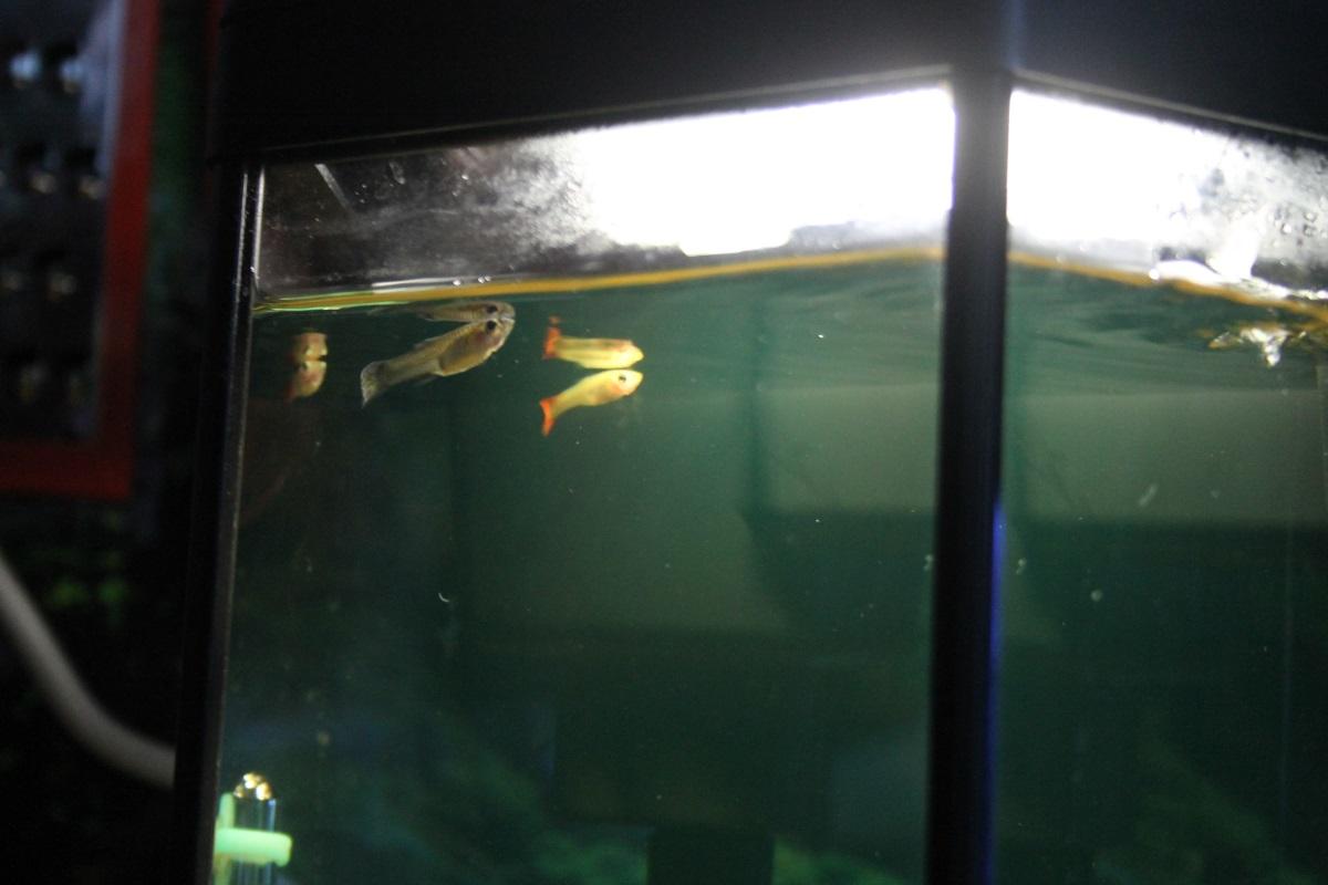 cum poate un acvariu să piardă în greutate
