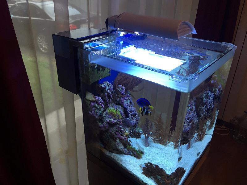 vand acvariu complet dennerle nano cube marinus 60l. Black Bedroom Furniture Sets. Home Design Ideas