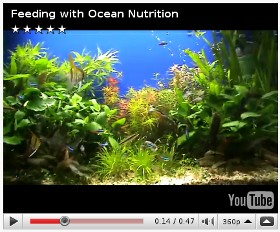 Alex.B Artemia Brine shrimp feeding - Ocean Nutrition