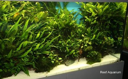 Bazin cu Microsorium, anubias, moss