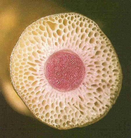 Sectiune dintr-o planta stem