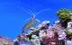acvariu recif
