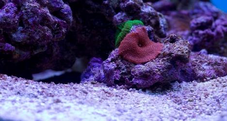 Tropic marin - sare marina pentru recif