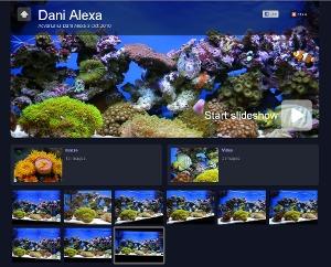 galerie foto / video - acvariul lui Dani Alexa