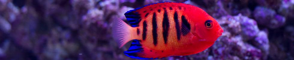 medicament pentru îmbinările peștilor